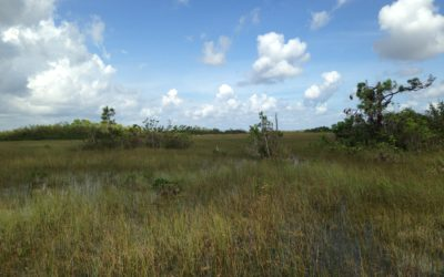 Opposing Deep Injection Well Plan for Everglades