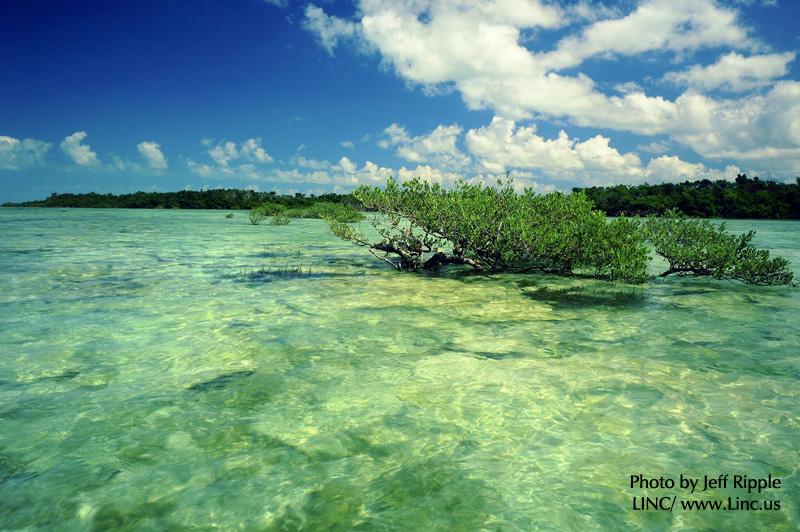 Florida Water and Land Legacy Amendment